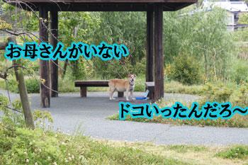 2011_0519_どこ行った