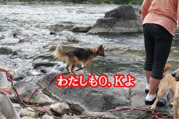 2011_0604_はなちゃんOK