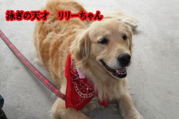 2011_0604_リリーちゃん