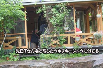 2011_0605_ツキヌキニンドウ