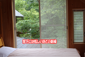 2011_0605_新緑
