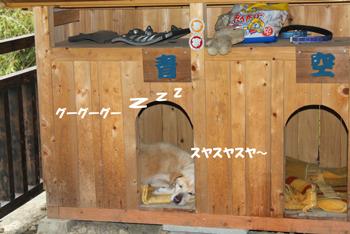 2011_0604お休み
