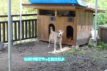 2011_0606_寝ぼけ眼