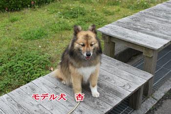 2011_0610_杏