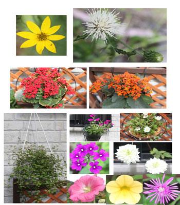 2011-0705花