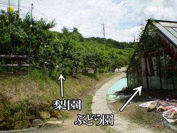 2011_0709_ぶどう園