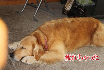2011_0731_りりーちゃんお疲
