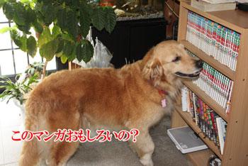 2011_0731_マンガ選び