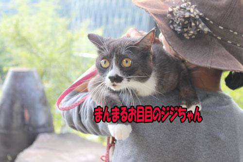 2011_1008_ジジちゃん