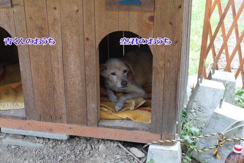 2011_1008青くんハウス
