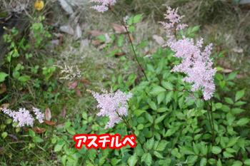 2011_0605_.jpg