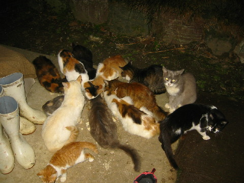 03sepうじゃうじゃ猫103_0398_1