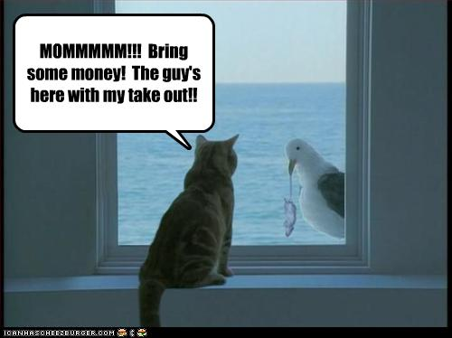 funny-pictures-seagull-brings-take-out.jpg