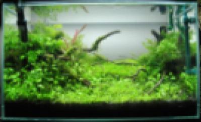 DSC_0993_convert_20110101225033.jpg