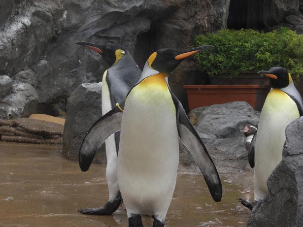 100523-14ペンギン2