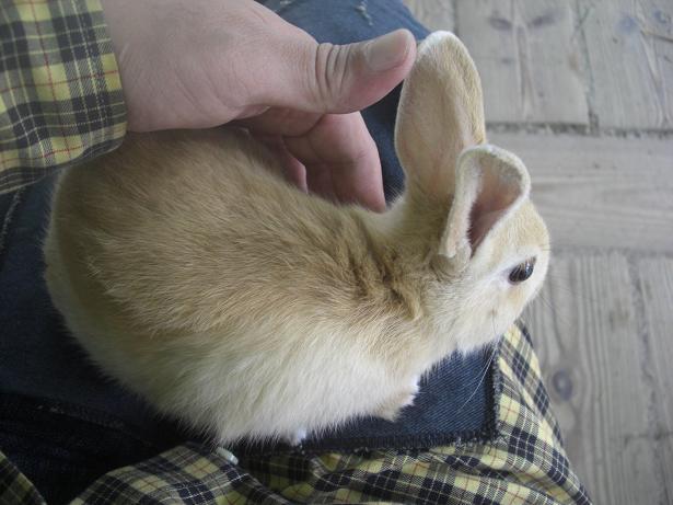 100523-20ウサギ2