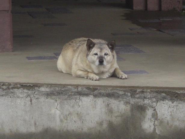 100523-32犬