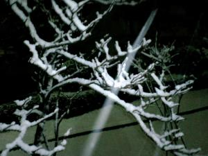 2010初雪景色70001.jpg