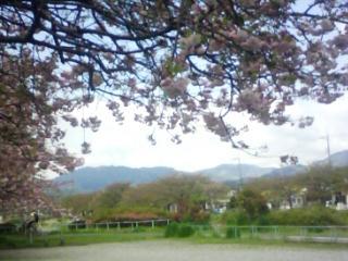 八重桜の咲く頃1