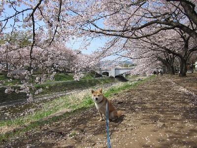 2011葉桜3-2