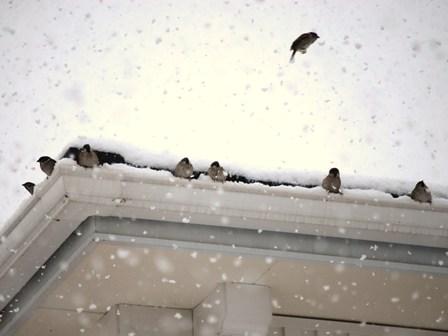 雪の中で大丈夫?