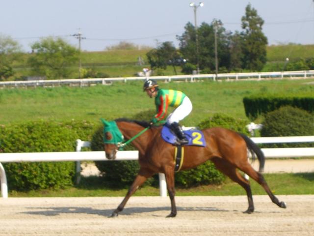 トウホクビジン(笠松):返し馬