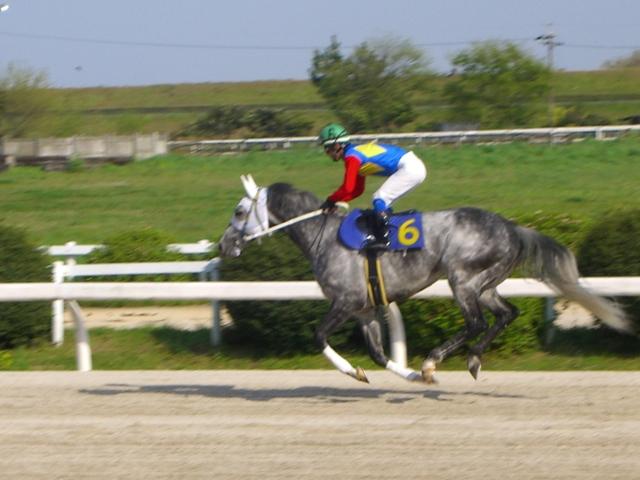 ナリタブラック(福山):返し馬