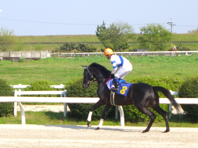 グランシュヴァリエ(高知):返し馬