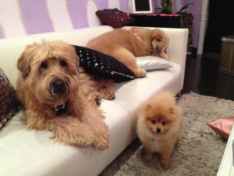 3dogs.jpg