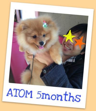 atomtomtom_convert_20120229022031.jpg