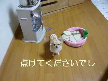 blog2011120603.jpg