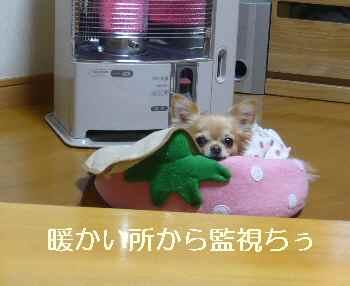 blog2011121001.jpg