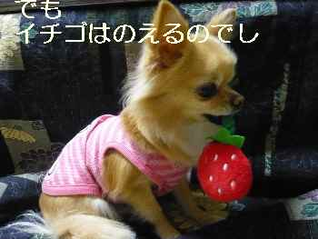 blog2011121302.jpg