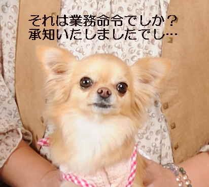 blog2011121508.jpg