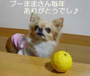 blog2011122201.jpg