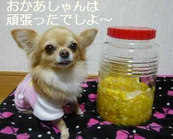 blog2011122203.jpg