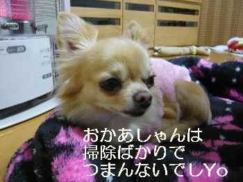 blog2011122701.jpg