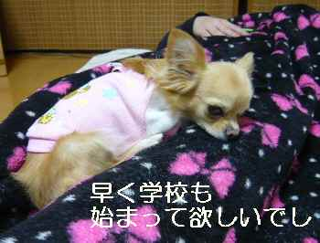 blog2012010405.jpg
