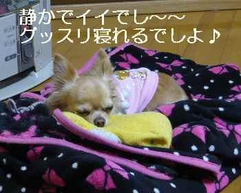 blog2012010501.jpg
