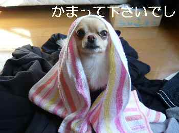 blog2012010601.jpg