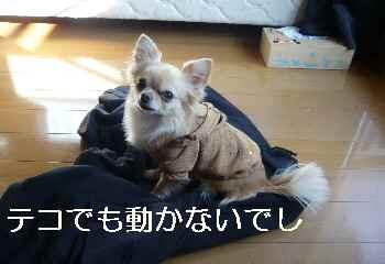 blog2012010602.jpg