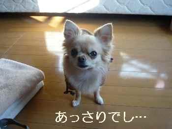 blog2012010603.jpg