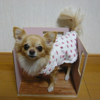 blog2012010802.jpg