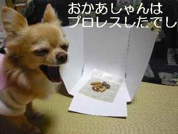 blog2012011401.jpg