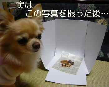 blog2012011402.jpg