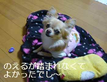 blog2012011502.jpg