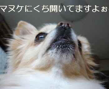 blog2012011602.jpg