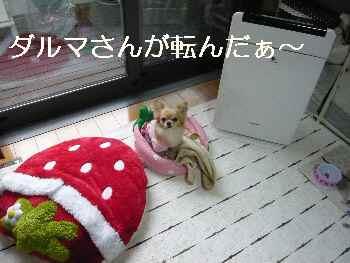 blog2012011801.jpg