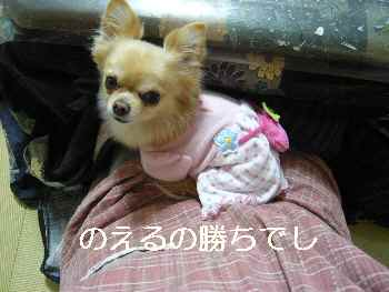 blog2012011804.jpg