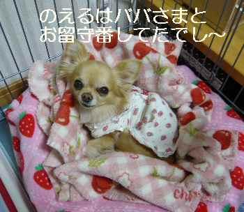 blog2012012402.jpg